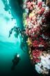 Scuba diving in British Columbia, Canada