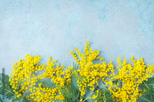 Yellow mimosa flower on turquoise table top view. Spring greeting card for Mothers day, 8 March or Easter.