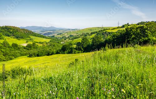 Keuken foto achterwand Pistache lovely mountainous countryside in summertime. grassy hillside near the forest. mountain ridge with high peak far in the distance