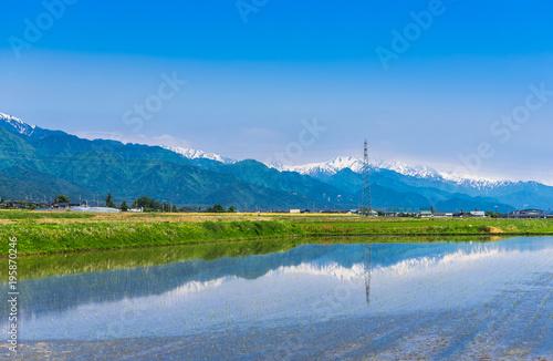春の信州 水田に映る北アルプスの山並み