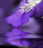 blue flower with a dew drop - 195877674