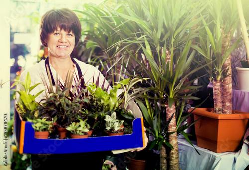 Adult assistant tending numerous green plants