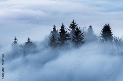 Mglisty góra krajobraz w ranku, drzewa w mgle, Polska
