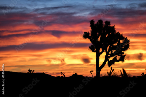 Papiers peints Morning Glory The morning sky erupts in color over Palm Springs, California just before sunrise.