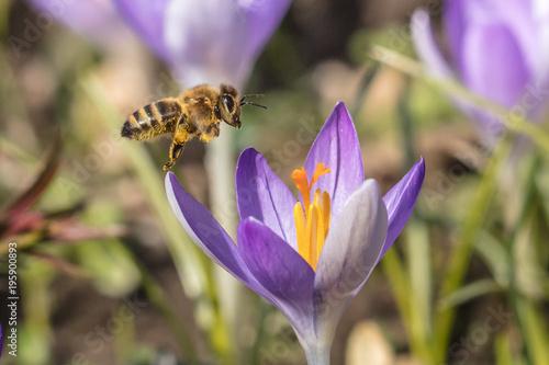 honigbienen - 195900893