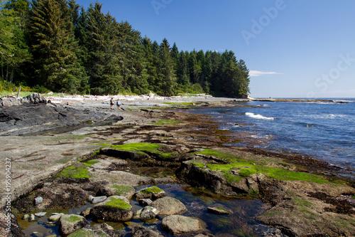 Poster Canada Küstenlandschaft am Botanical Beach im Juan de Fuca Provincial Park auf Vancouver Island, British Columbia, Kanada.