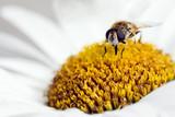 pollination in springtime - 195908276
