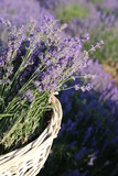 lavender flowers in a basket - 195911233