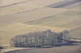 Drzewa na polu