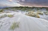 morning on sand dunes by coast - 195923695