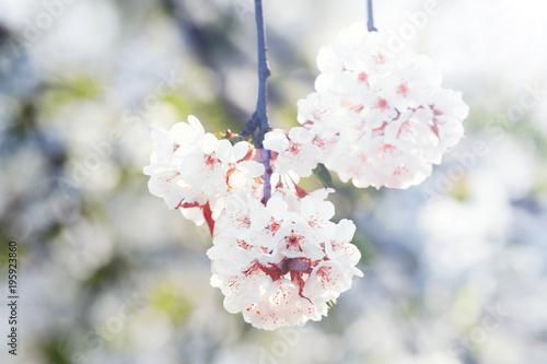 Fotobehang Natuur Der Frühling ist da!