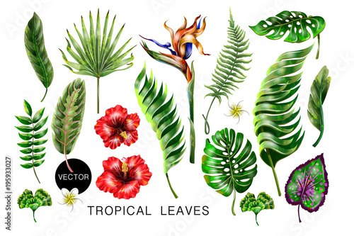 Set of realistic tropical flowers and leaves for your design. - 195933027