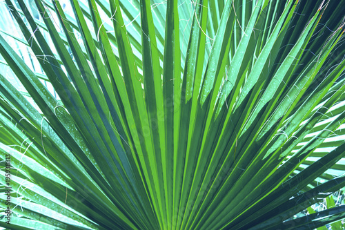 Papiers peints Bambou Palm leaves dark green background. Coconut palm trees