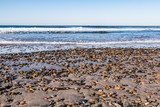 South Carlsbad State Beach in San Diego, California with colorful stones covering the beach. - 195943210