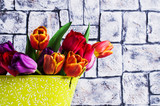 Bouquet of multicolored tulips