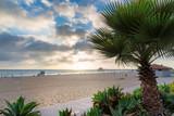 Palm trees at sunset in Manhattan Beach. Fashion travel and tropical beach concept.