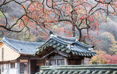 Fotobehang Zalm 기와지붕 위의 빨갛게 익은 감나무