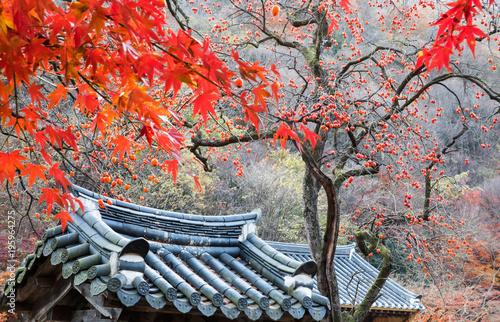 Foto op Plexiglas Zalm 기와지붕 위의 빨갛게 익은 감나무