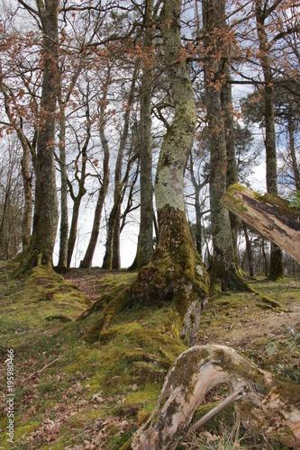 Staande foto Weg in bos Dans la forêt 2