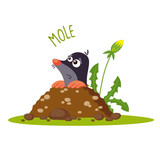 Mole vector illustration