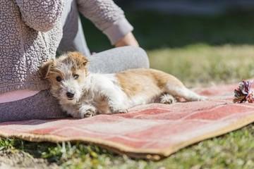 terrier puppy dog portrait
