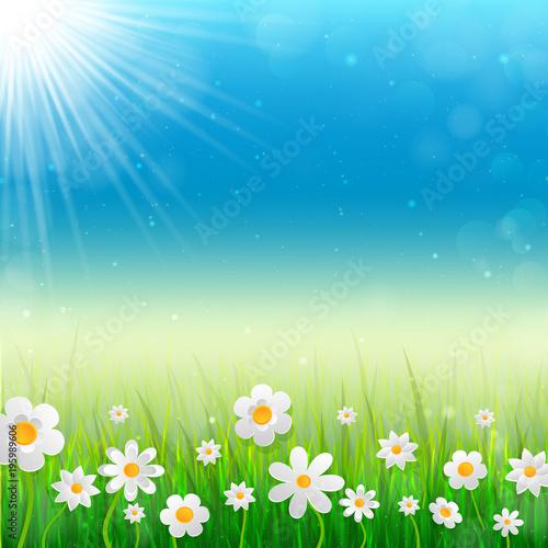 Wiosny tło z białymi kwiatami w trawie.