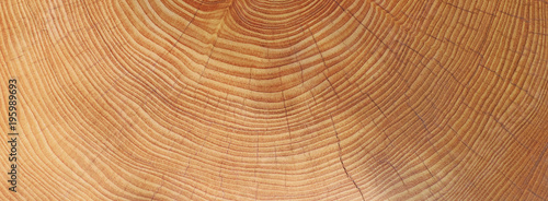 Holz - Jahresringe - Hintergrund - 195989693
