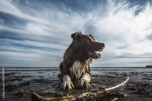 dog playing on the beach - 195990850