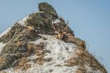 The deer. Sakhalin Island, Russia - 195994441