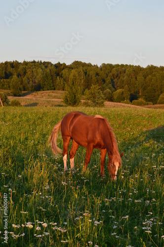 Fotobehang Paarden grazing horse
