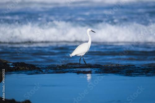 Poster Canarische Eilanden white seagull near the shore