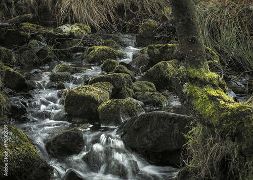 Foto op Canvas Zwart Rural woodland running stream, Shropshire UK