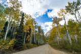 Dirt road through colorful fall forest in the Colorado mountains