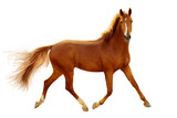 A red horse in contour light is trotting freely. - 196056673