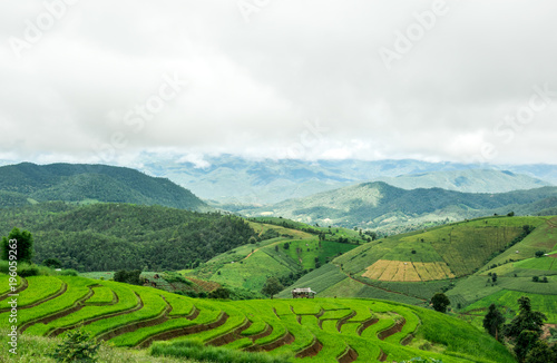 Deurstickers Rijstvelden Green Rice Field Terraced with clouds in Chiangmai, Thailand