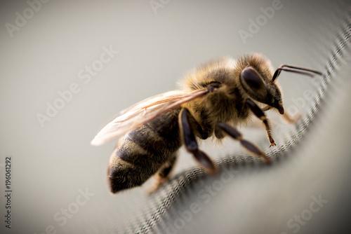 Fotobehang Bee Bienen Macro