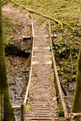 Foto op Canvas Spoorlijn schmaler Holzpfad im Wald mit Moos und Laub