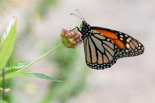 Fotobehang Vlinder Butterfly on Flower