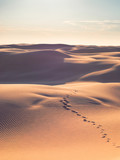 Footsteps on empty desert. - 196110866