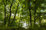 forest trees with beautiful sunlight - 196122882