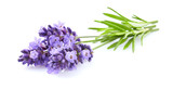 Lavender flowers in closeup - 196125887