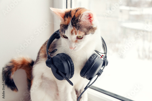 Aluminium Kat A cat with headphones on the windowsill
