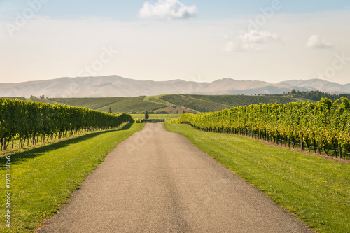 Foto op Canvas Wijngaard gravel road across autumn vineyard in New Zealand