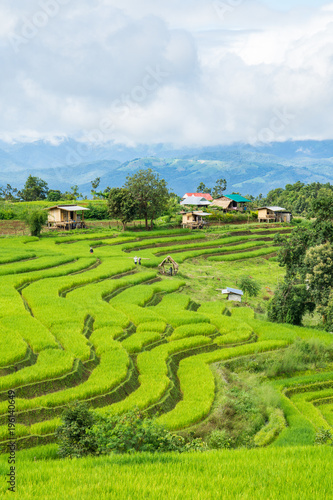 Keuken foto achterwand Lime groen Agriculture village of rice on terrace hill, Pa Bong Piang, Chiang Mai, Thailand