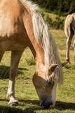 White and Brown Horse while Grazing