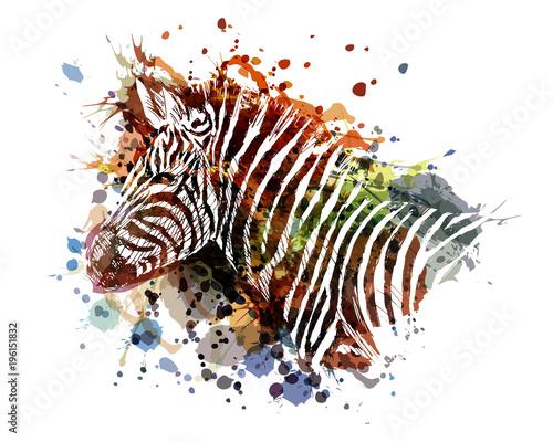 kolor-ilustracji-wektorowych-zebra