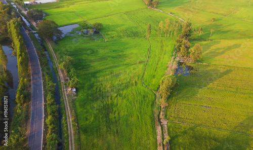 Keuken foto achterwand Pistache Aerial view of green rice fields from north east Thailand,agriculture concept.