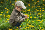 Child on green grass lawn with dandelion flowers on sunny summer day. Kid playing in garden.