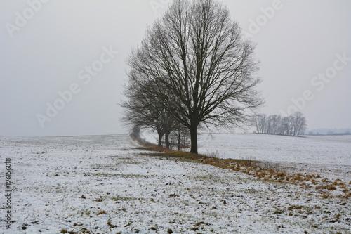 Foto op Plexiglas Donkergrijs Winterlandschaft mit Bäumen