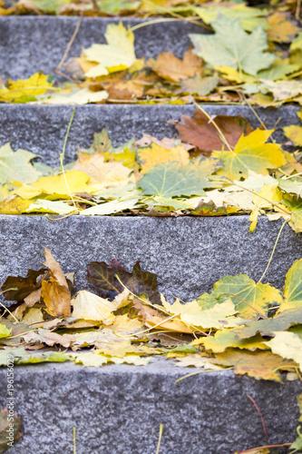 Keuken foto achterwand Herfst yellow autumn leaves on granite steps. Autumn Park